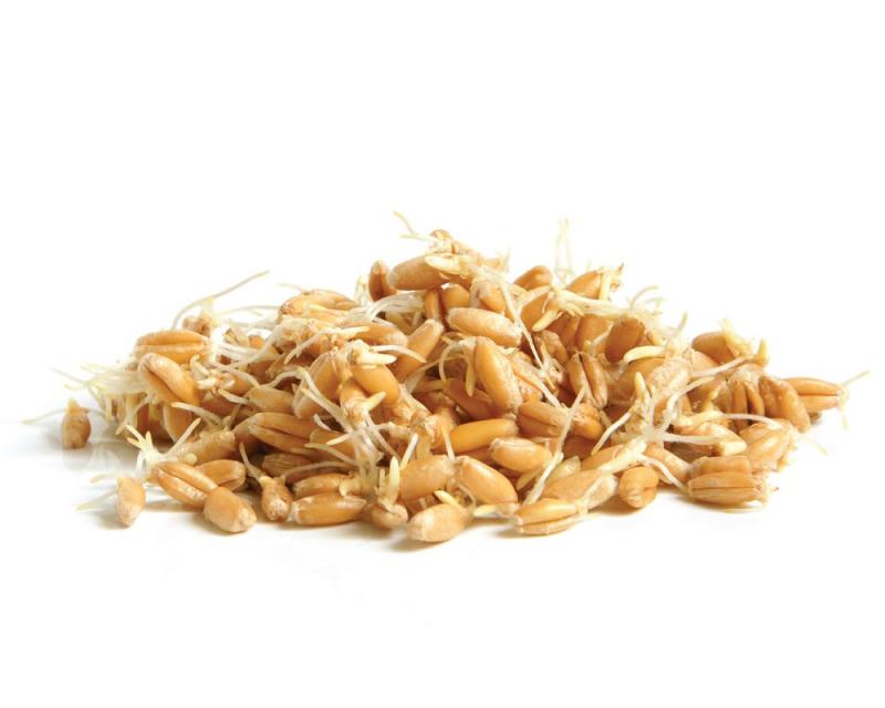 PŠENICE - semínka na klíčení 50g - PŠENICE - semínka na klíčení 50g