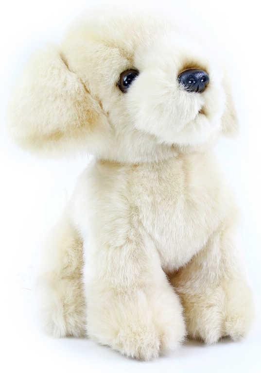 PLYŠ Pes Labrador 18 cm bílý