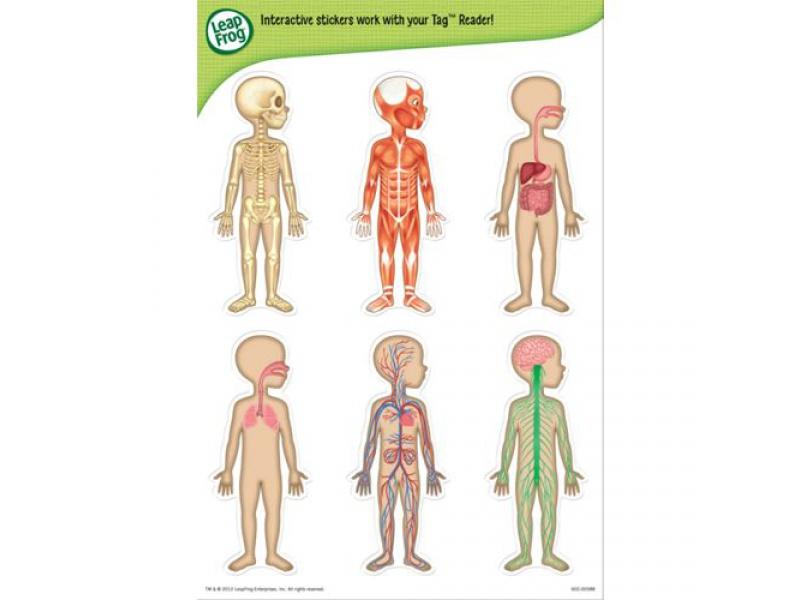 Leapfrog - Poznáváme lidské tělo