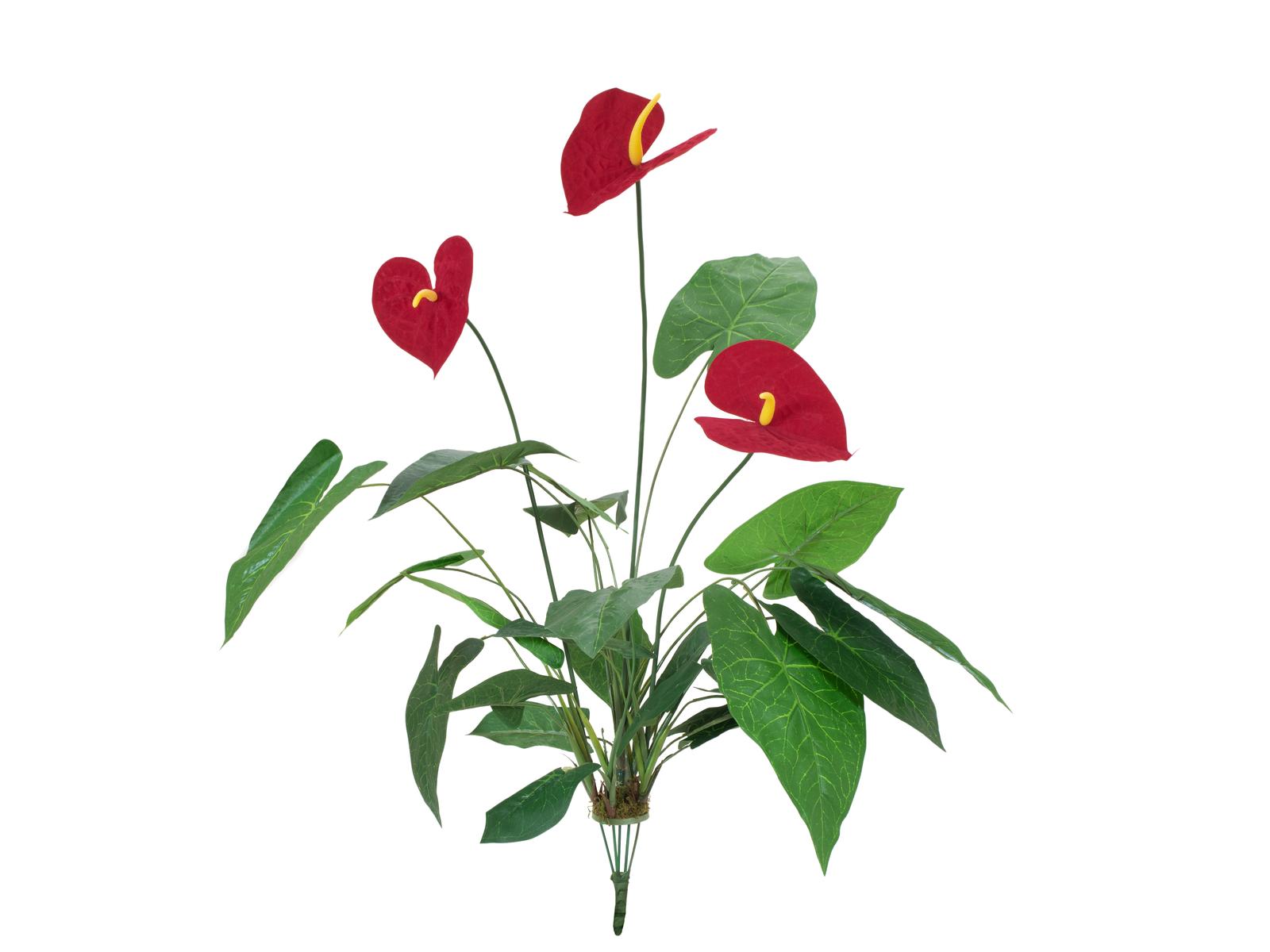Toulitka, 3 květy, 70 cm