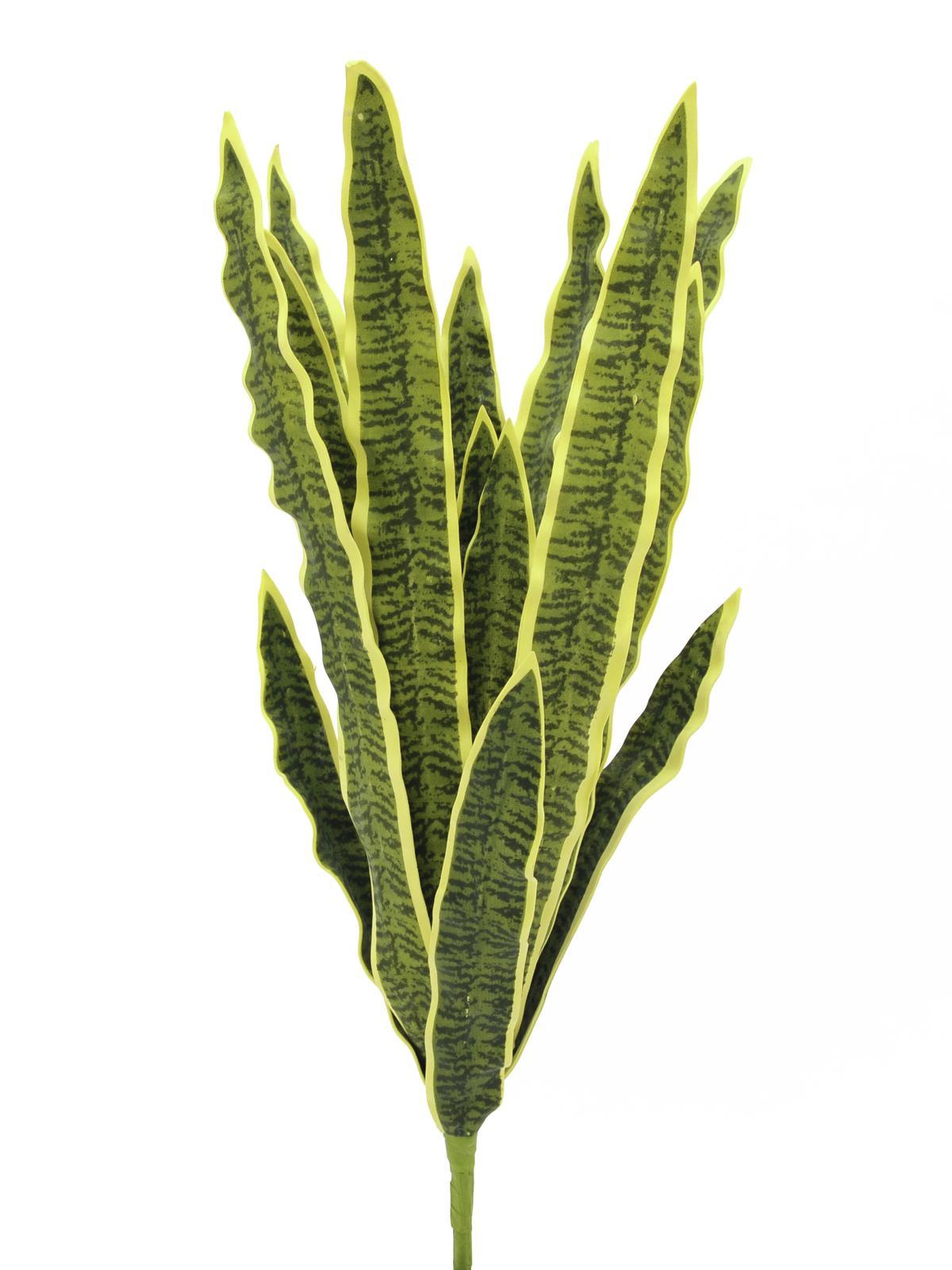 Sansevieria (tchýnin jazyk), 74 cm