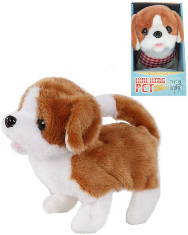 PLYŠ Pes hnědobílý 17 cm chodící na baterie štěká