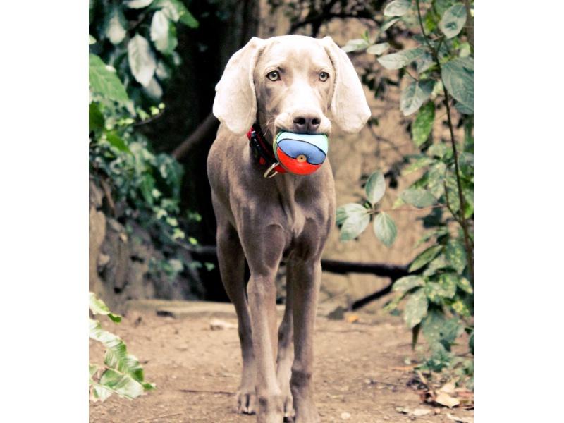 Lanco Pets - Hračka pro psy - Basketbalový míč barevný