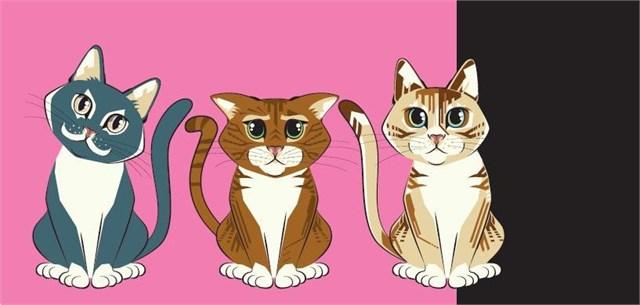 ALBI Money gift - Kočky