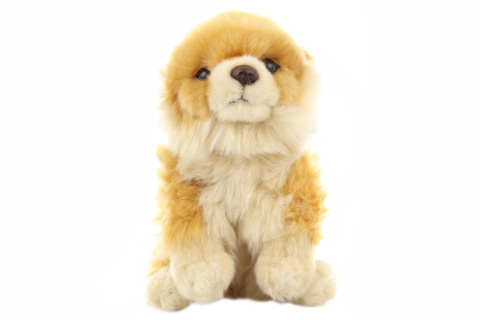 Plyš Pes Pomeranian 21 cm - ECO-FRIENDLY