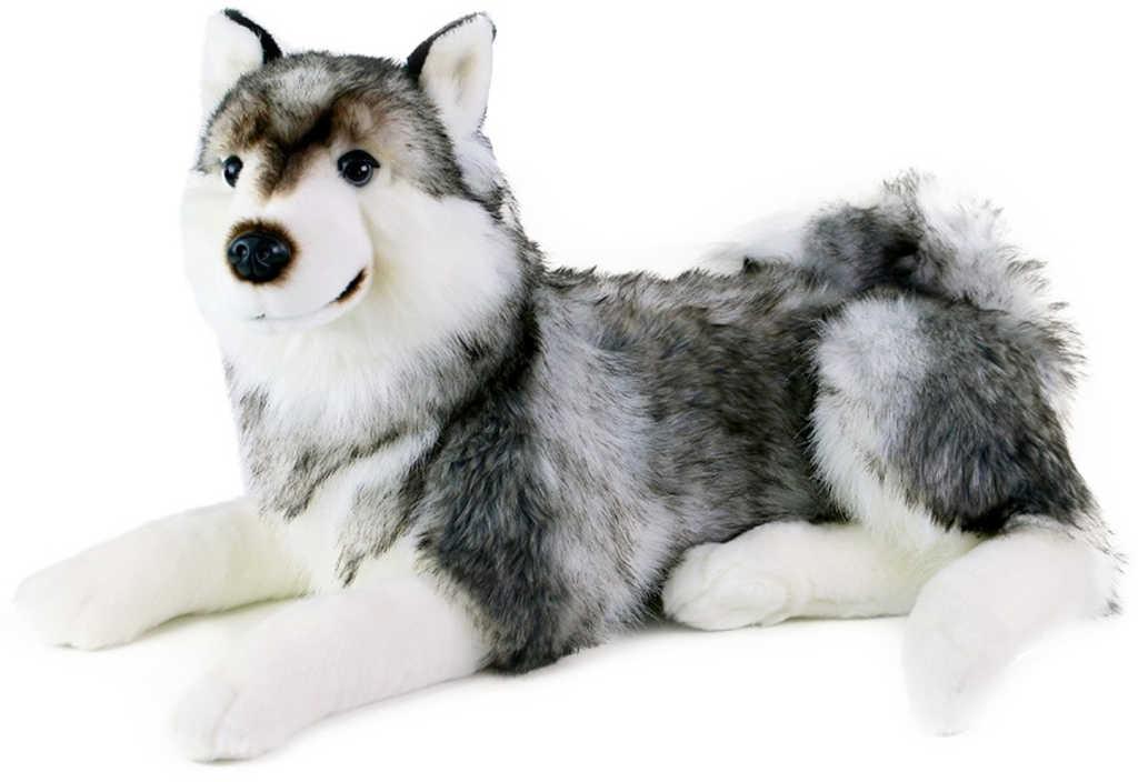 PLYŠ Pes Husky 50cm ležící *PLYŠOVÉ HRAČKY*