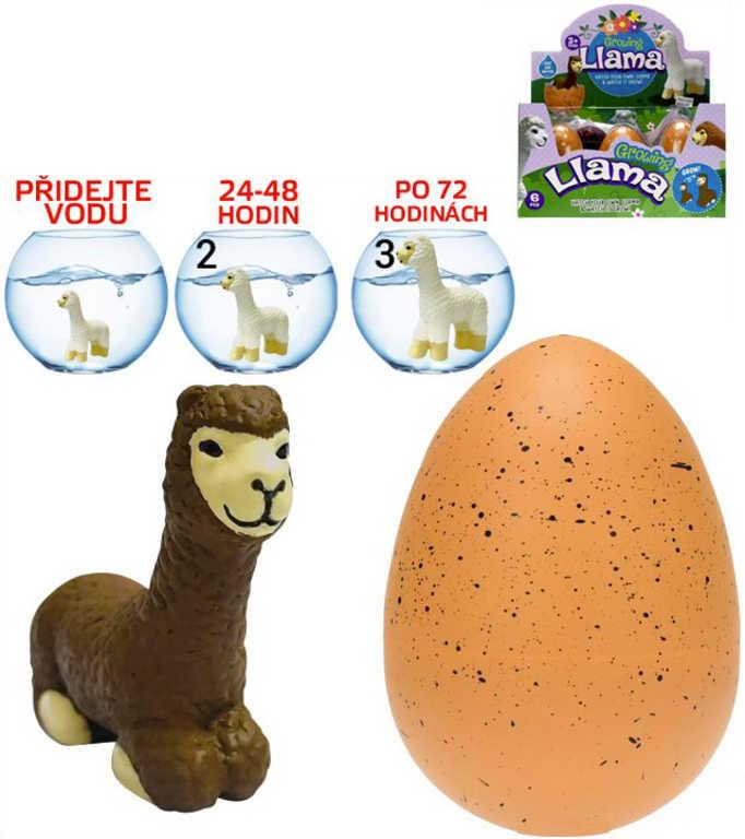 Lama Alpaka zvířátko líhnoucí se a rostoucí překvapení ve vajíčku