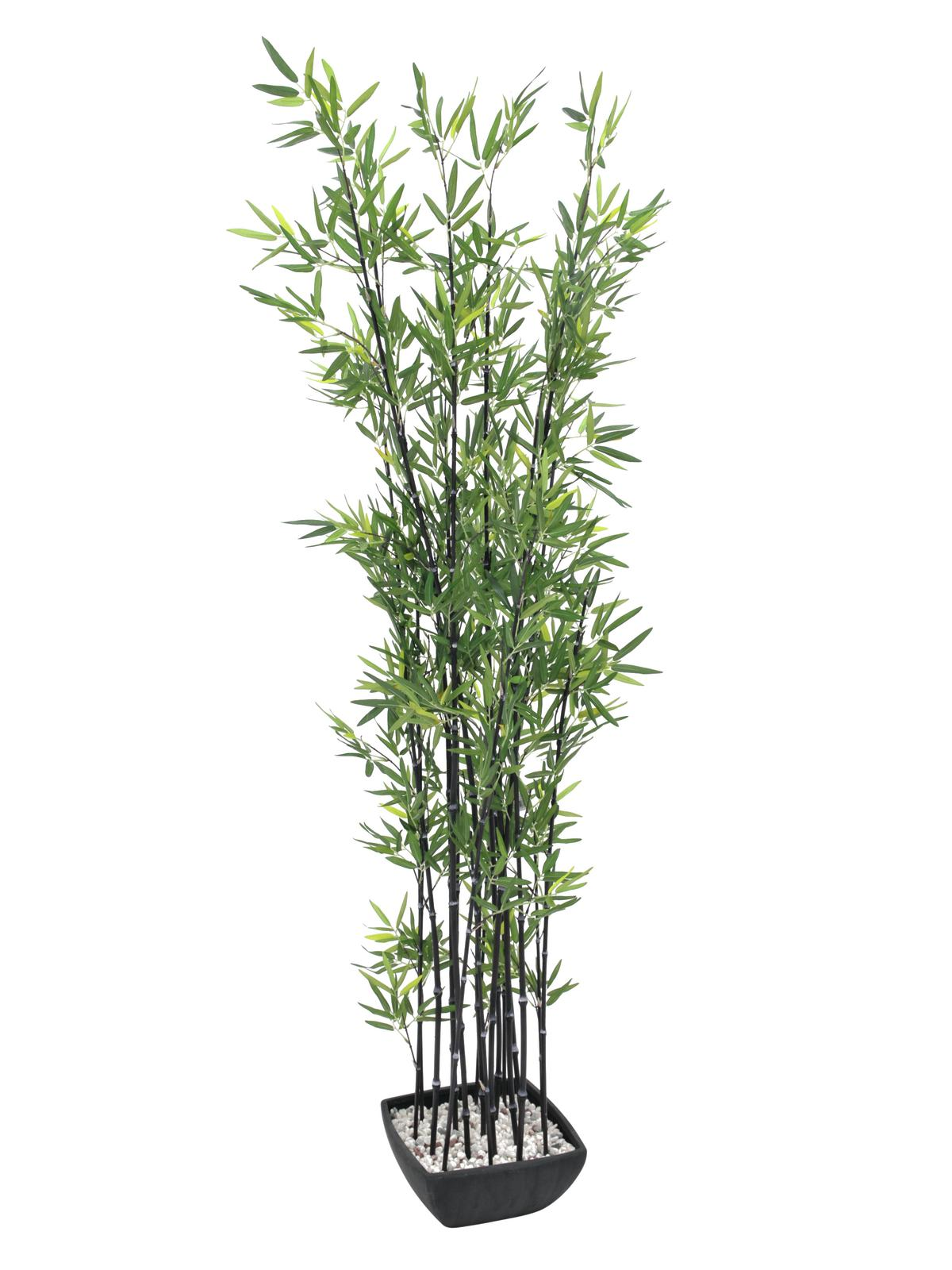 Bambus v černém květináči, 180 cm