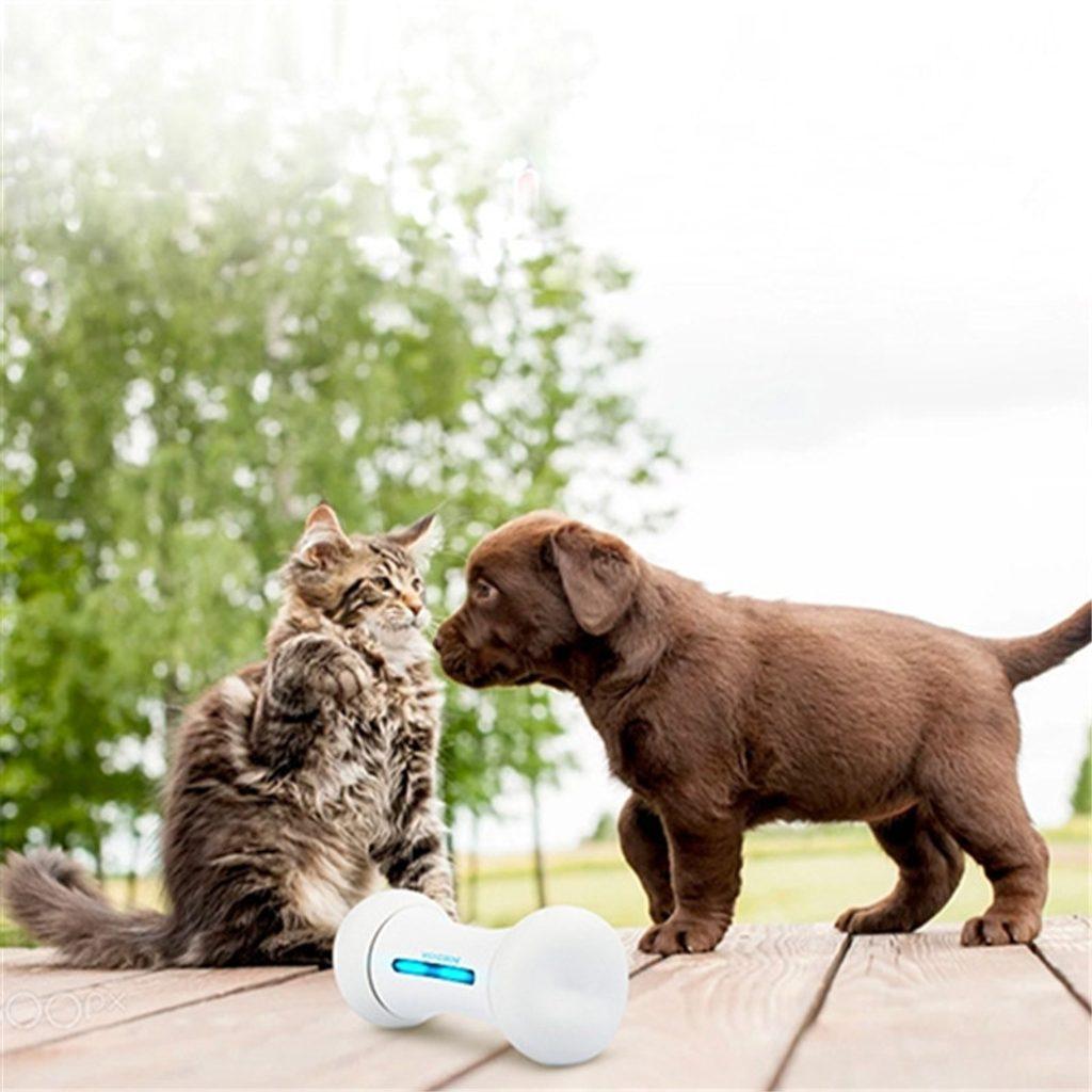 Wickedbone - interaktivní kost pro psy a kočky - https://dscdn.cz/images/4/d/5/c/1/2/8/8/e/3/1a7d7f94831f7c73417c16.jpg