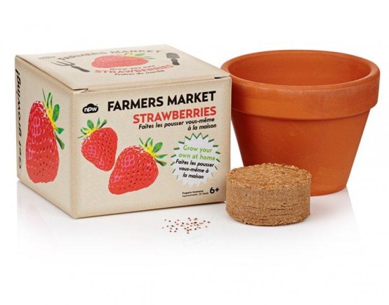 Vypěstuj si jahody