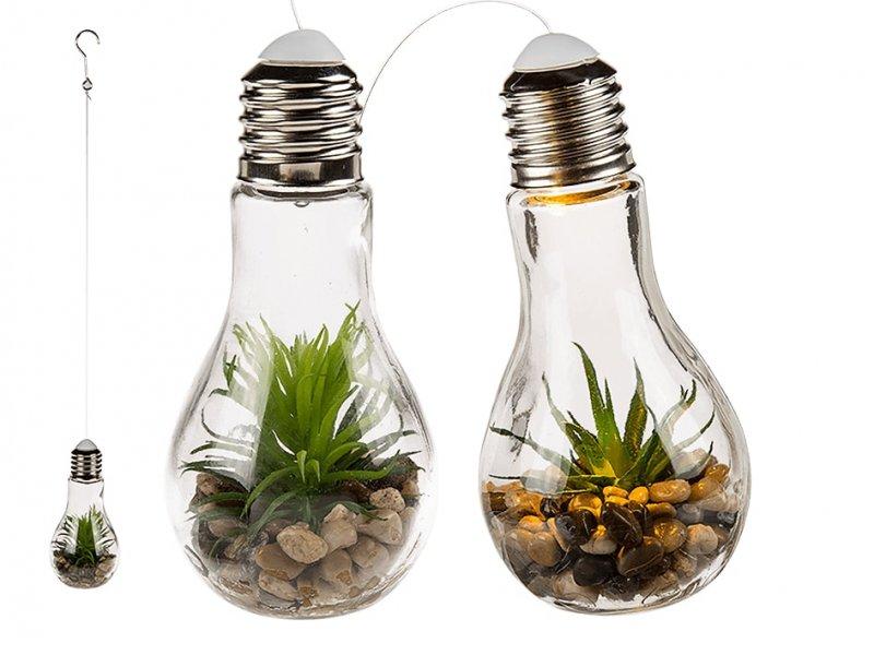 Dekorativní sukulent v žárovce