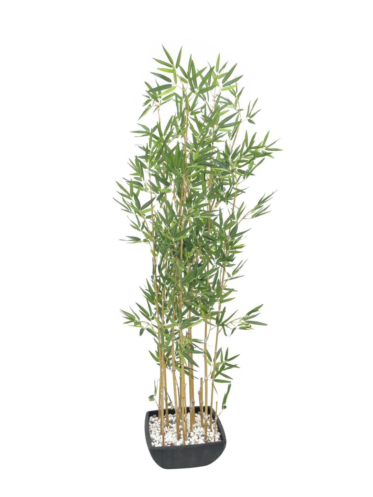 Bambus v černém květináči, 150 cm