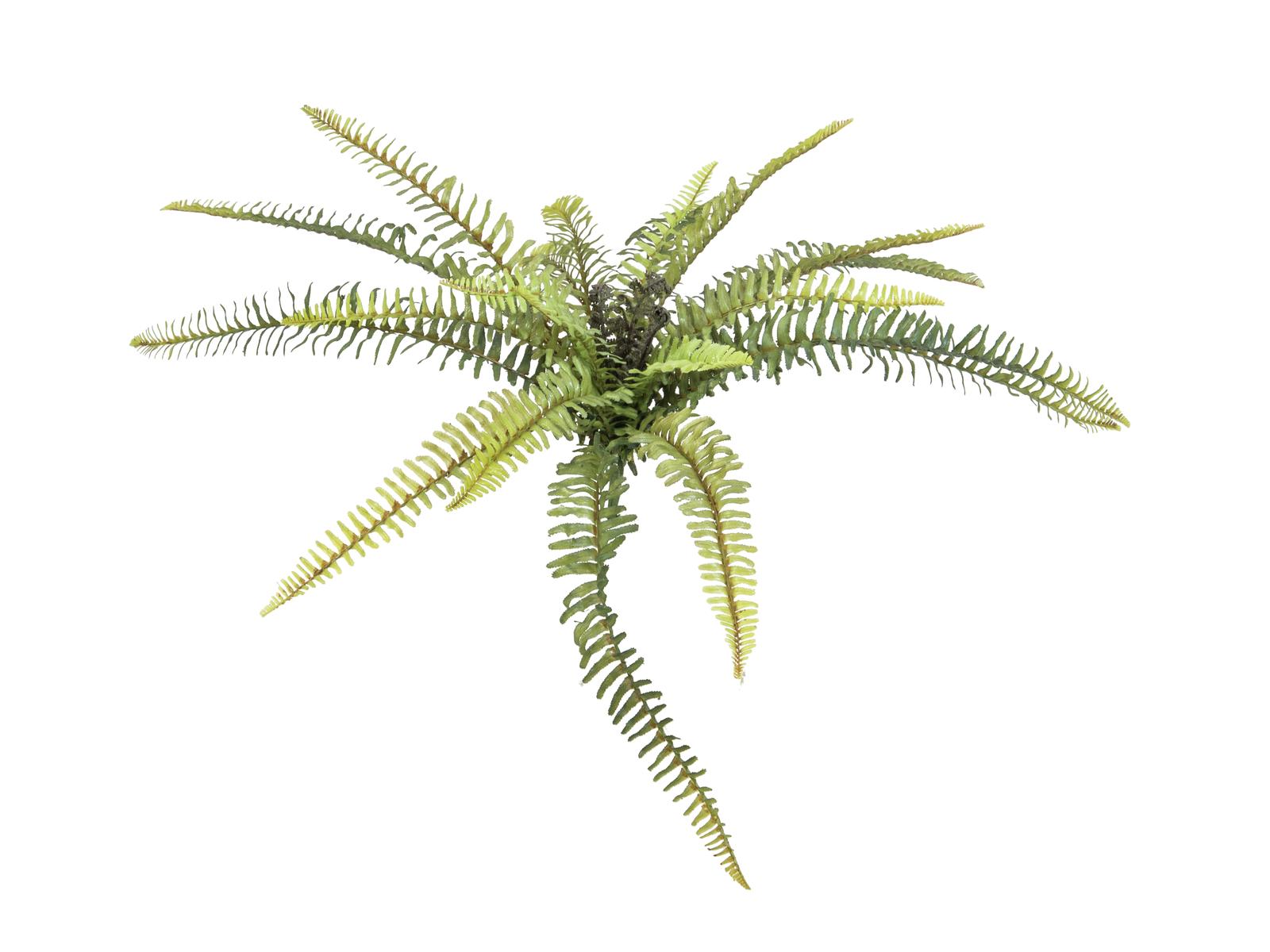 Lesní kapradina 40 cm