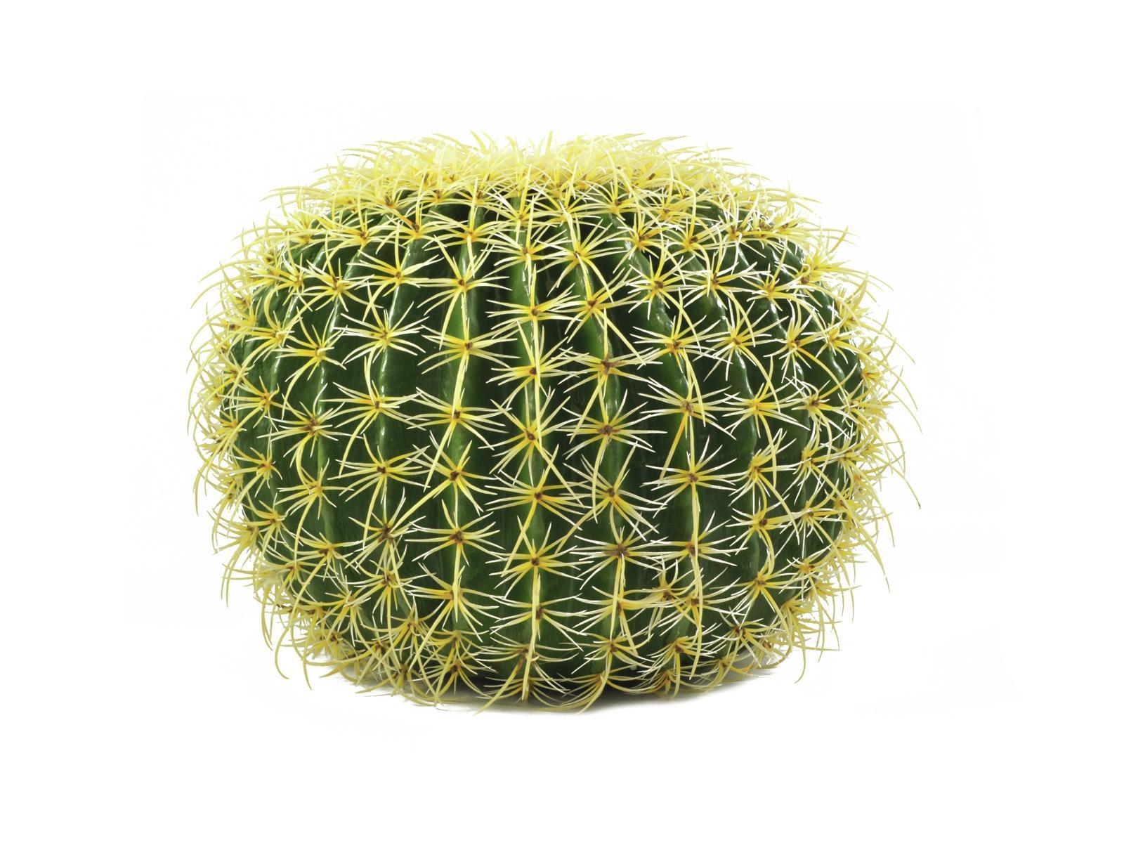 Kulatý zlatý kaktus, 37cm