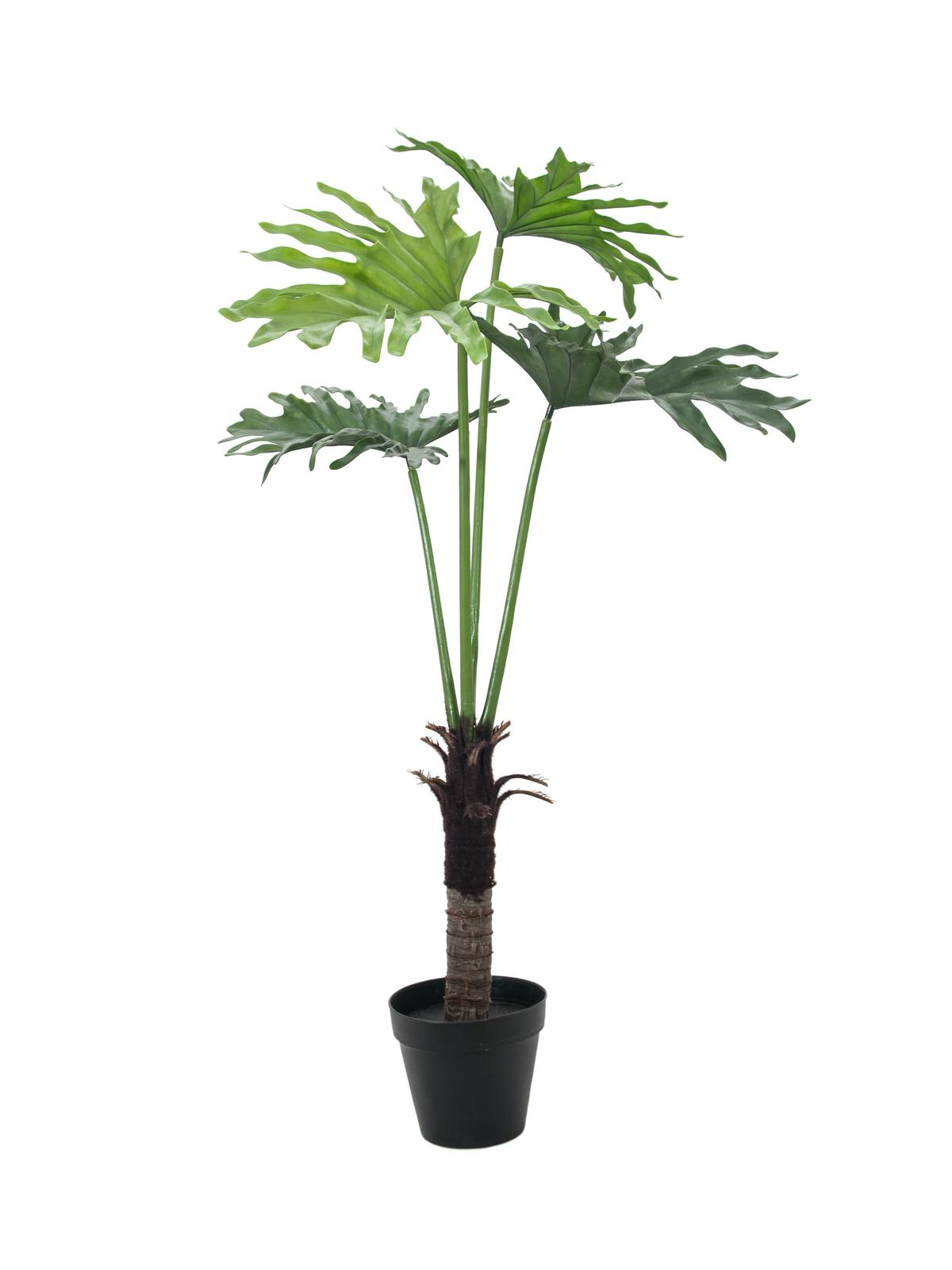 Filodendron palma, 120 cm