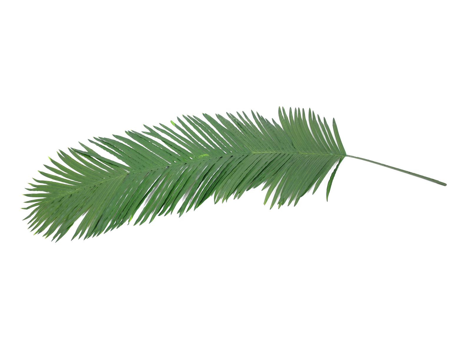 Kokos - královská palma list (kus), 210 cm