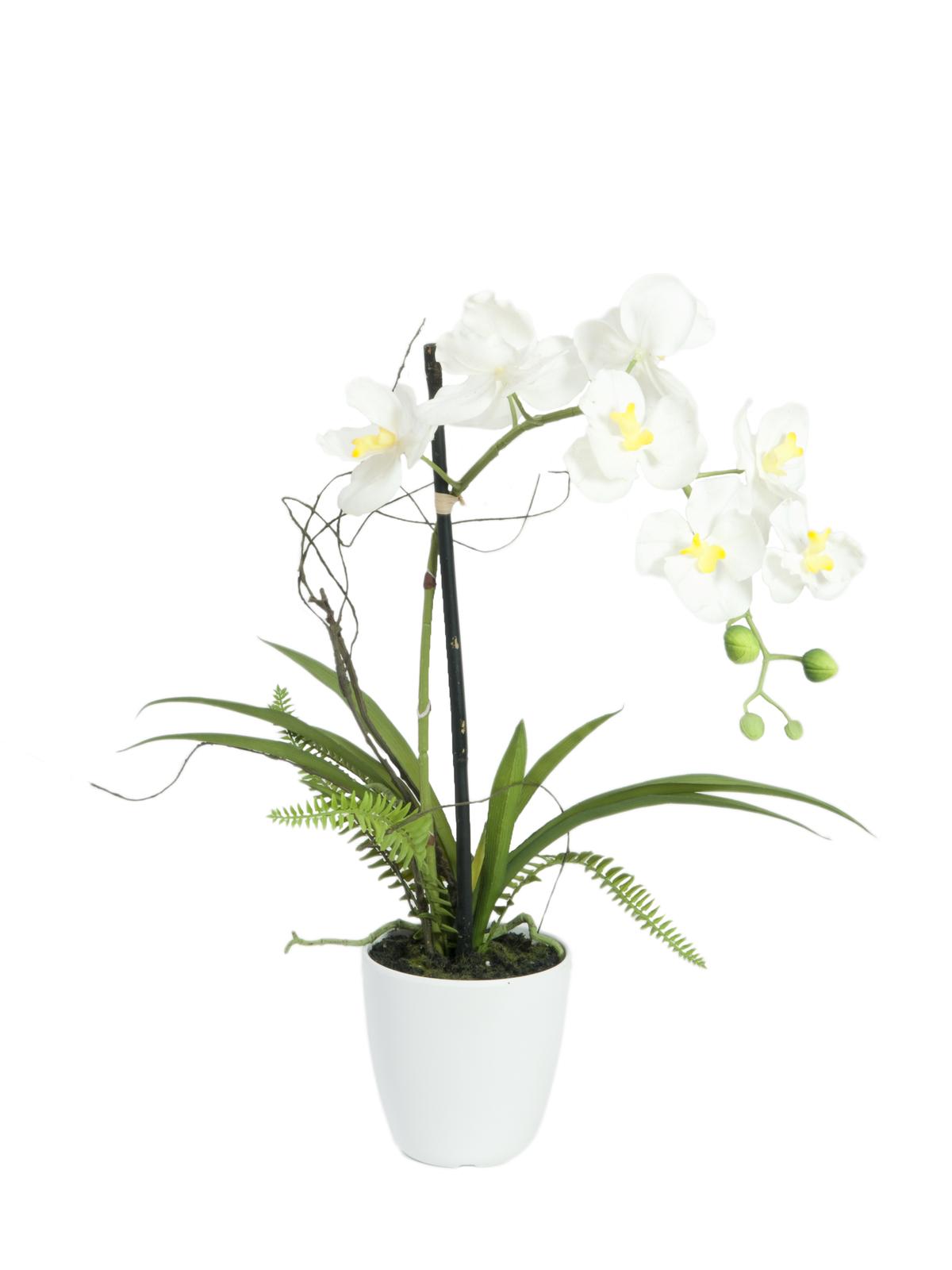 Orchidej bílá v dekoračním květináči, 8 květů, 62 cm