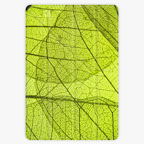 Pouzdro iSaprio Smart Cover - Leaves - iPad 9.7″ (2017-2018)