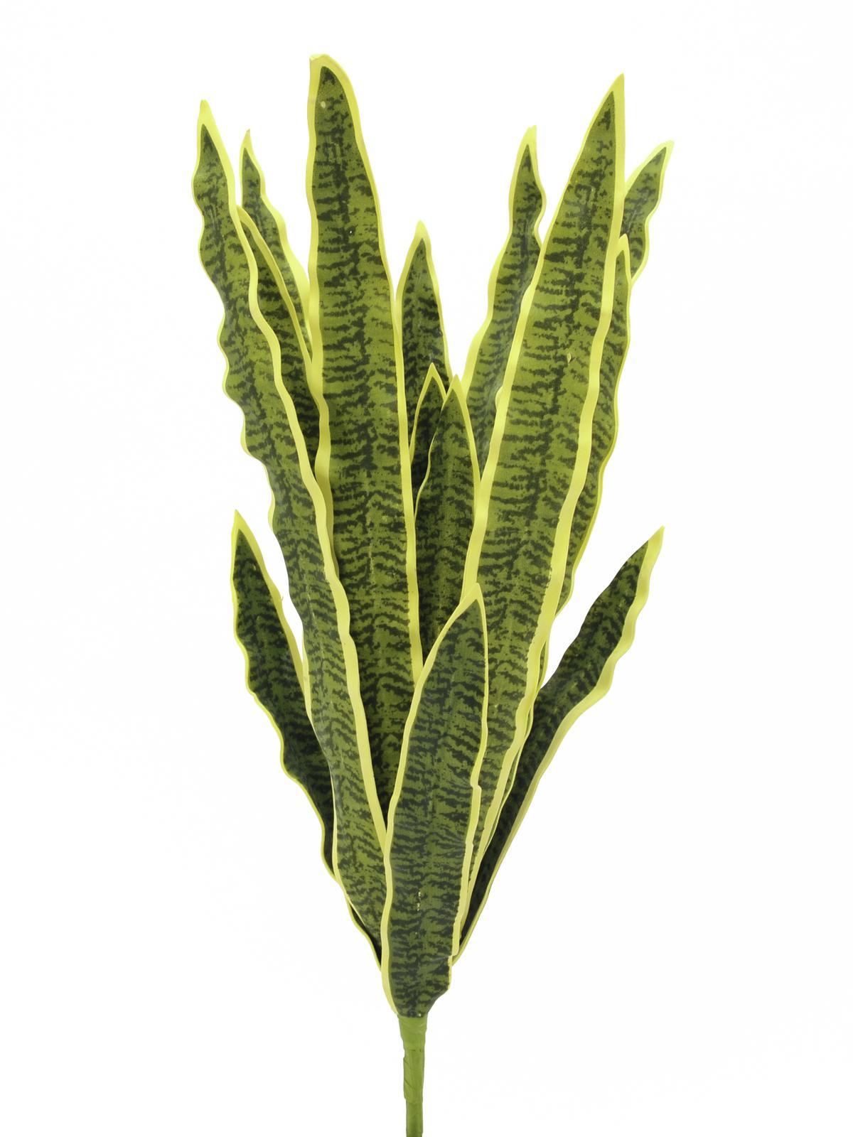 Sansevieria zeleno-žlutá, 60 cm