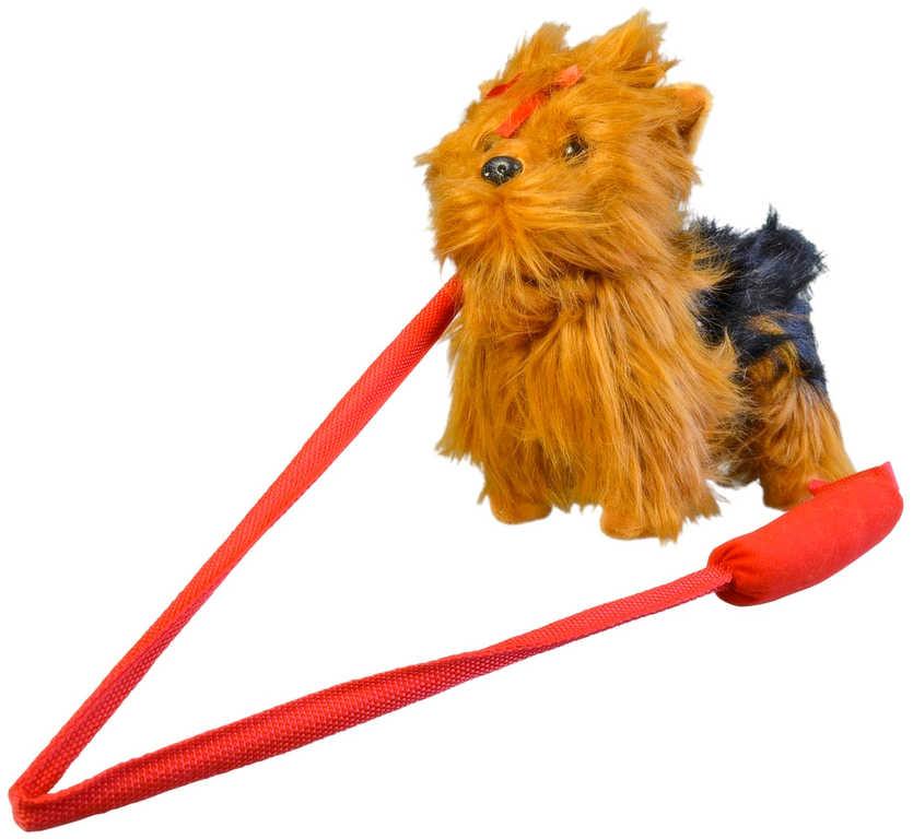 PLYŠ Pes Yorkshir interaktivní štěká chodí na vodítku na baterie Zvuk