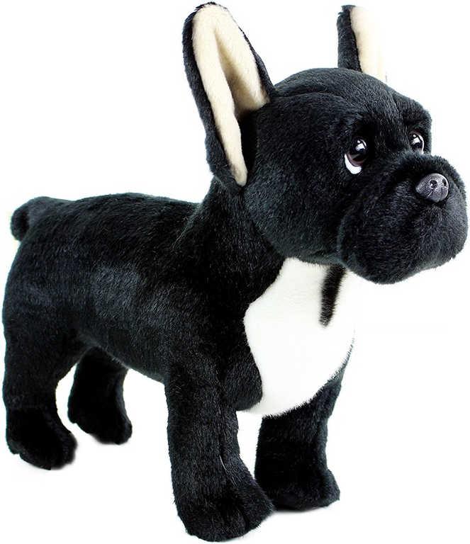 PLYŠ Pes francouzský buldoček 30 cm stojící