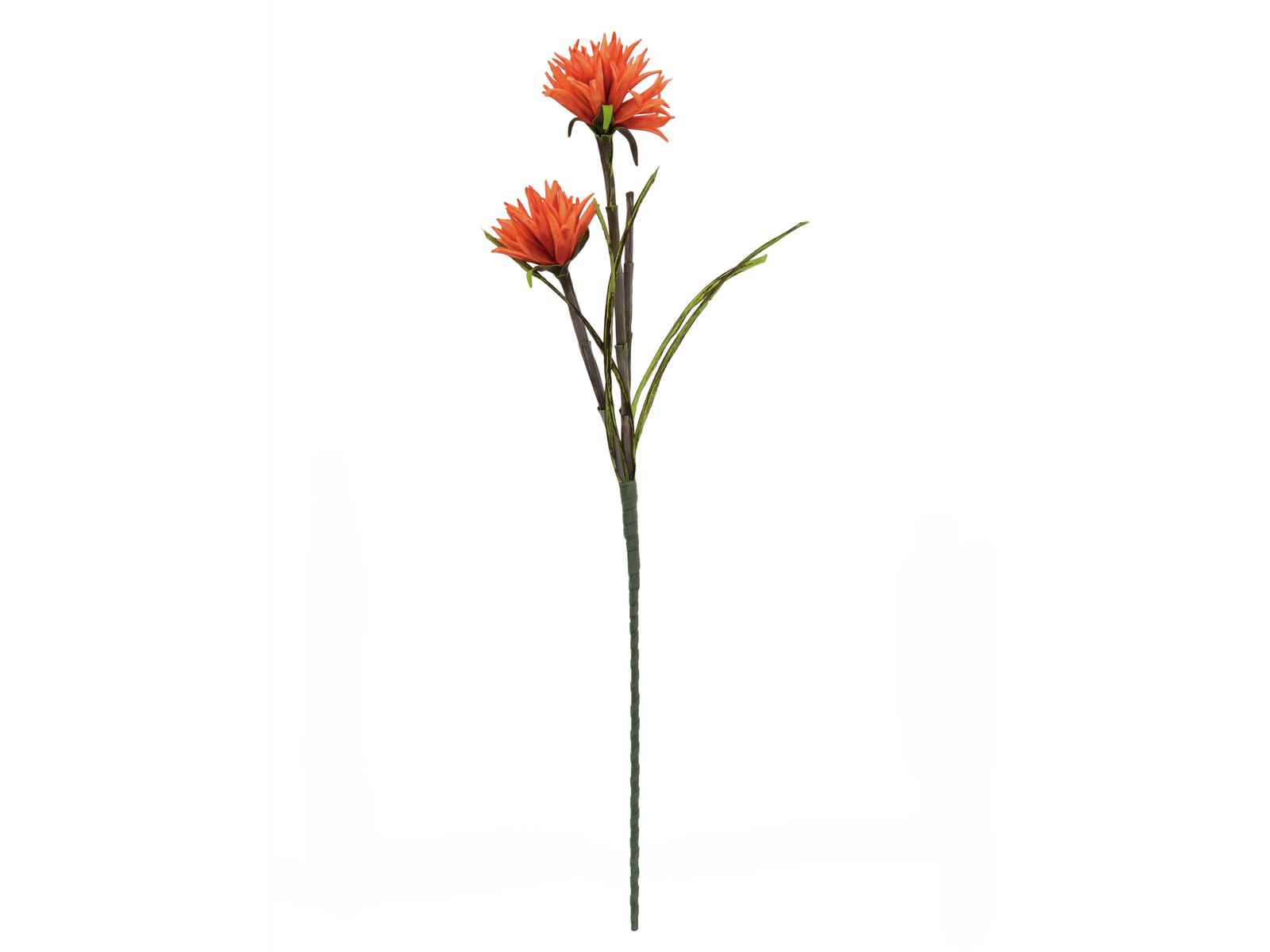 Jiřina oranžová, 100 cm