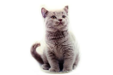 Polštářek 32 x 25 cm šedé kotě
